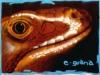 eguana.jpg